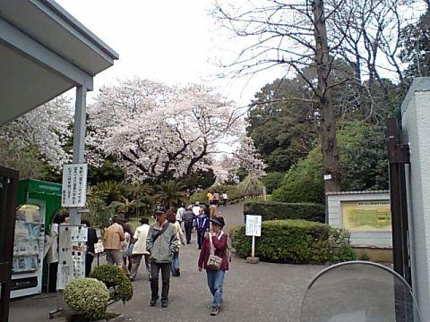 koishikawa_shokubutsuen.jpg
