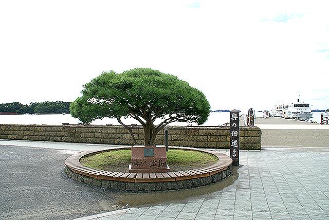 matsushima_matsu.jpg