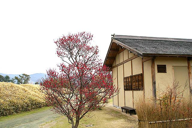 matsuyama_dogopark1.jpg
