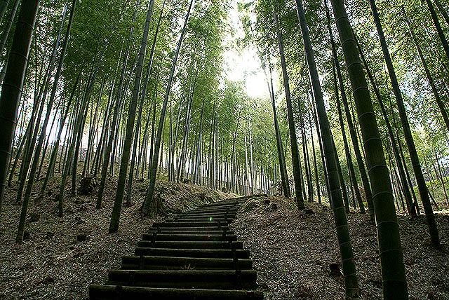 moa_bamboo.jpg