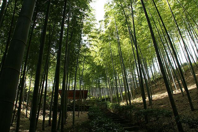 moa_bambooforest1.jpg