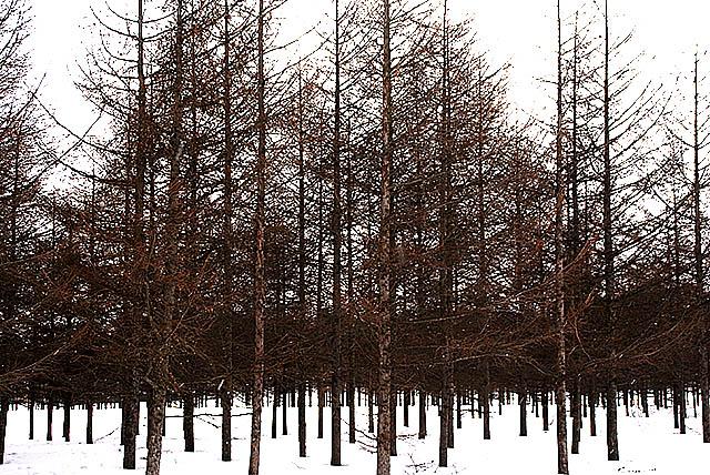 moerenuma_forest.jpg
