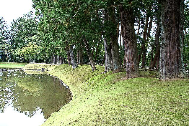 motuji_pine.jpg