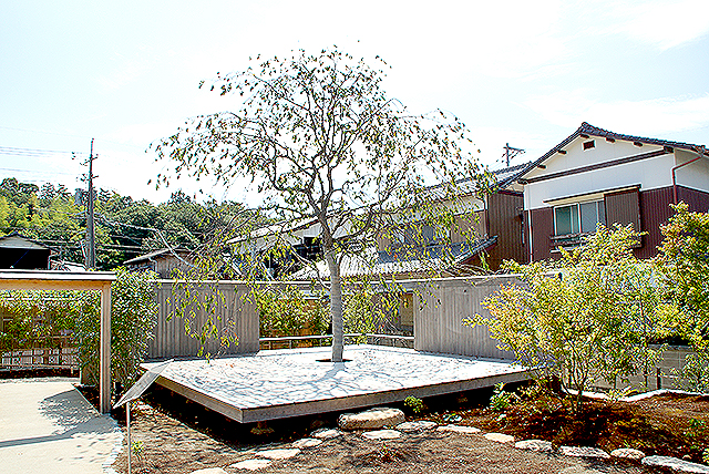 naoshimahall_tree.jpg
