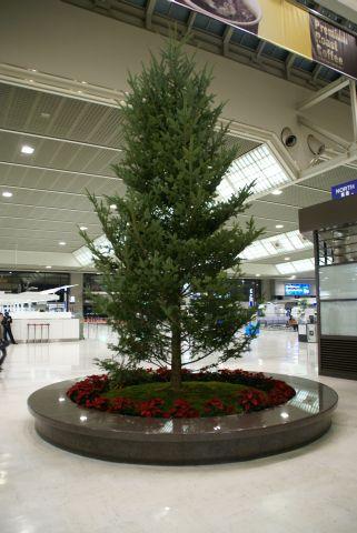 narita_airport2_tree.jpg