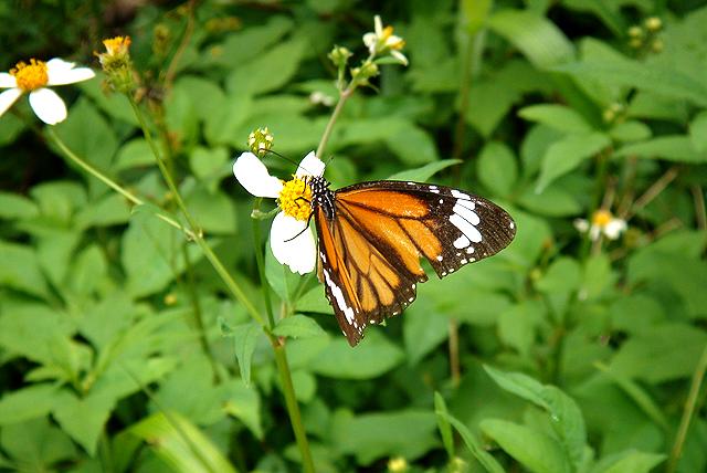 okinawa_butterfly.jpg