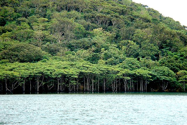 okinawa_mangrove1.jpg