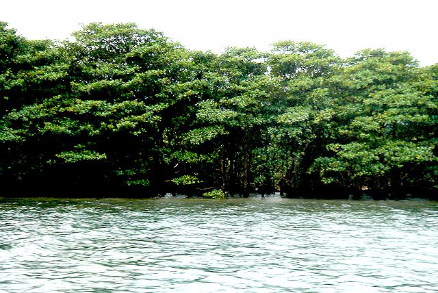 okinawa_mangrove2.jpg