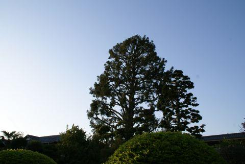 oyamadai_tree.jpg