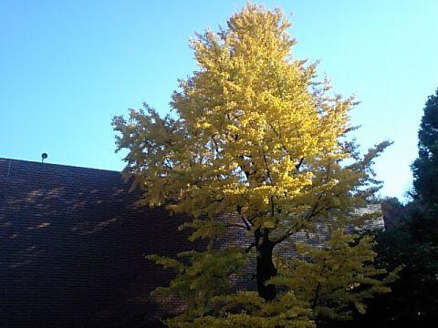 philadelphiamuseum_tree.jpg