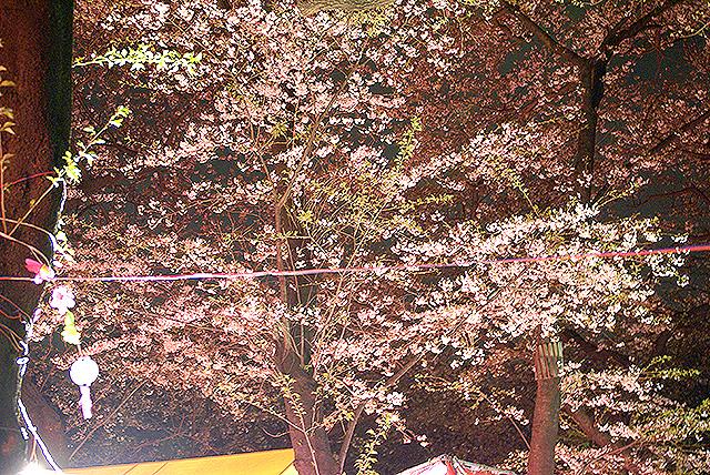 sakura_senzokuike2.jpg