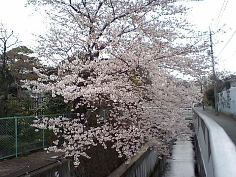 sakura_todoroki.jpg
