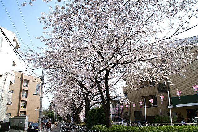 sakura_toritsudai_st.jpg