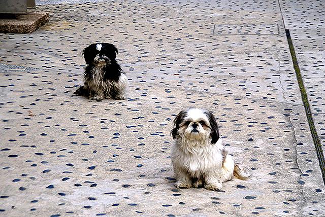 shks_dogs.jpg