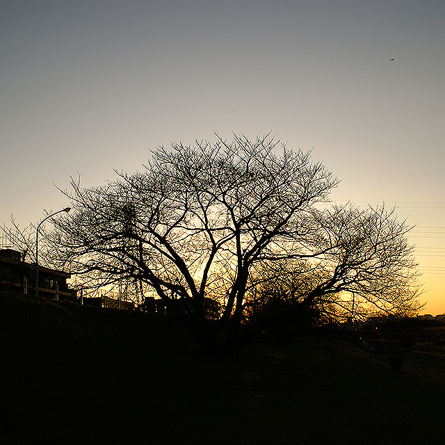 sunrise09_tree.jpg