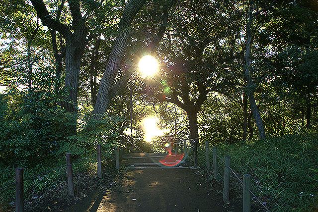 tamagawast_tamagawadai_sunset2.jpg