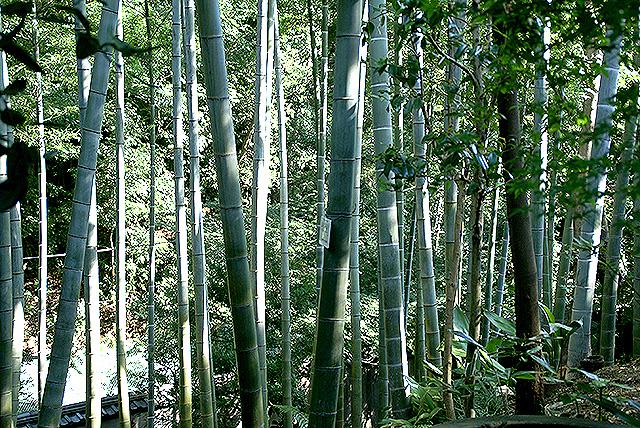 todoroki_plant_mosochiku.jpg
