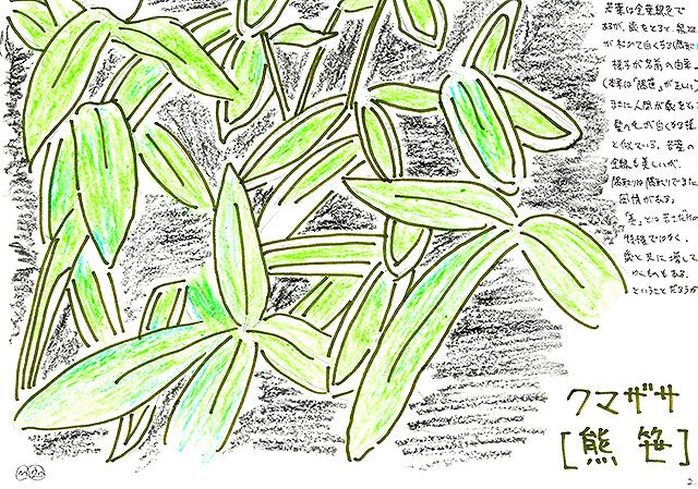 todoroki_plant_sketch2.jpg
