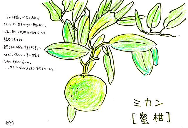 todoroki_plant_sketch3.jpg