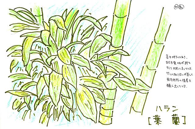 todoroki_plant_sketch6.jpg
