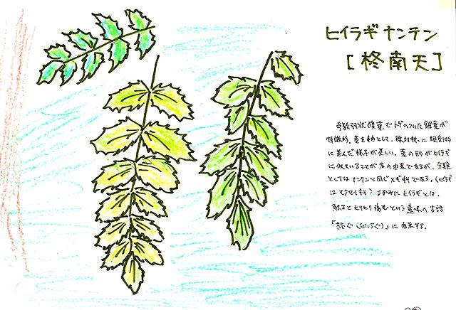 todoroki_plant_sketch8.jpg