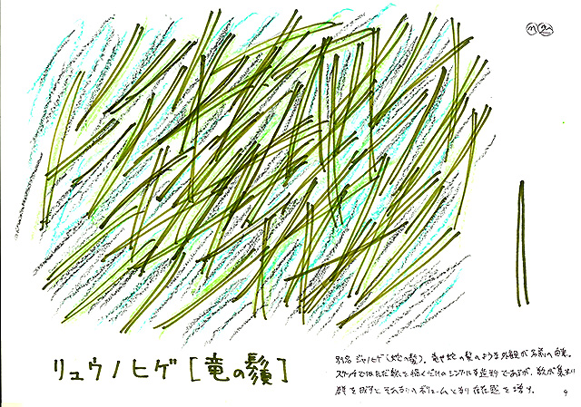 todoroki_plant_sketch9.jpg