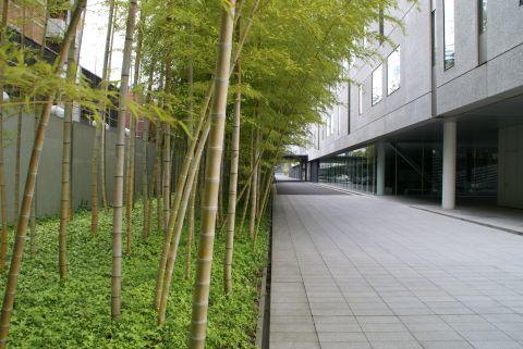 toyocho_takenaka_bamboo.jpg
