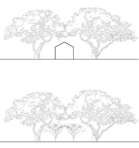 treehouse1_0.jpg