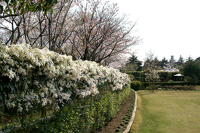 vangi_garden5.jpg