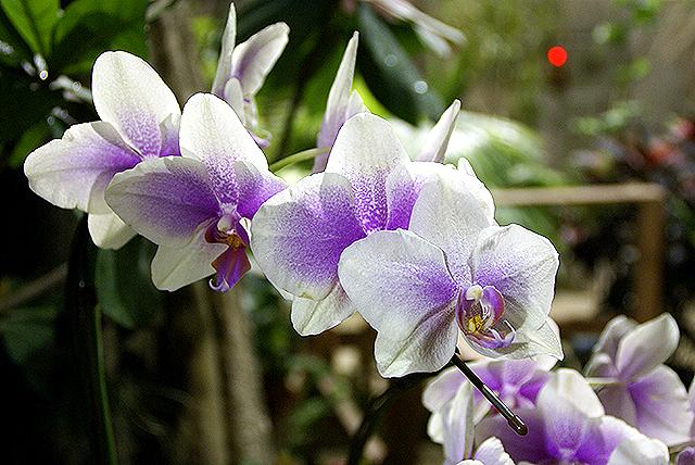 yumenoshimaplants_flower1.jpg