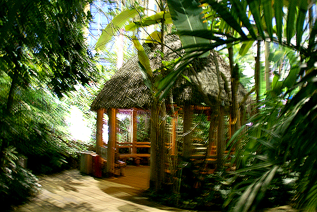yumenoshimaplants_junglehouse.jpg