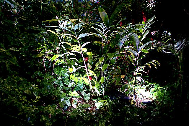 yumenoshimaplants_lightup.jpg
