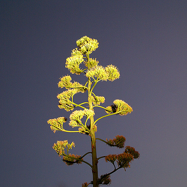 yumenoshimaplants_tallplants.jpg