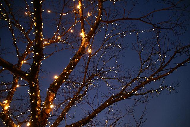 asagirilakelightup_tree1.jpg