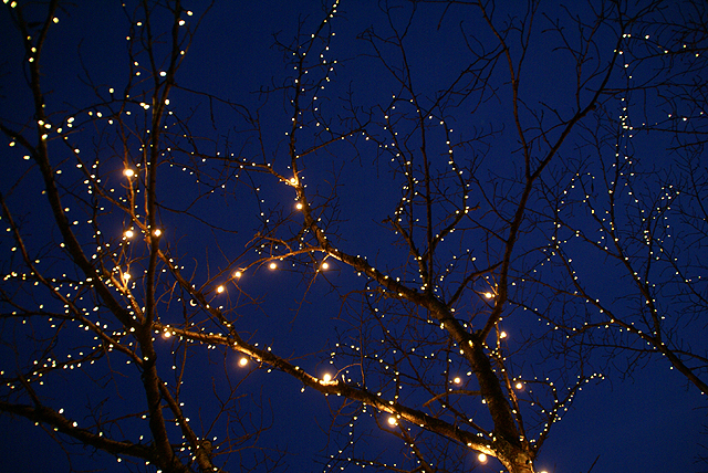 asagirilakelightup_tree2.jpg
