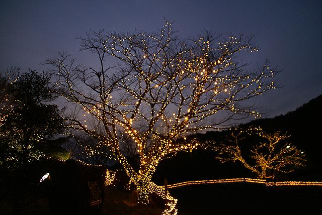 asagirilakelightup_tree3.jpg