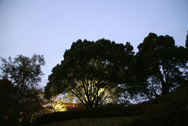 asagirilakelightup_tree4.jpg