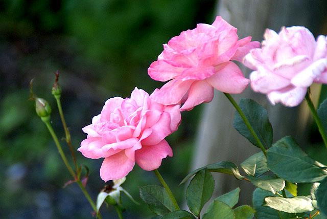 geopark_doike_flower.jpg
