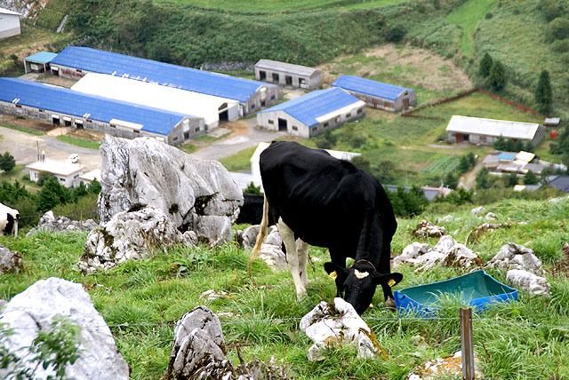 geopark_genjigadaba_cow.jpg