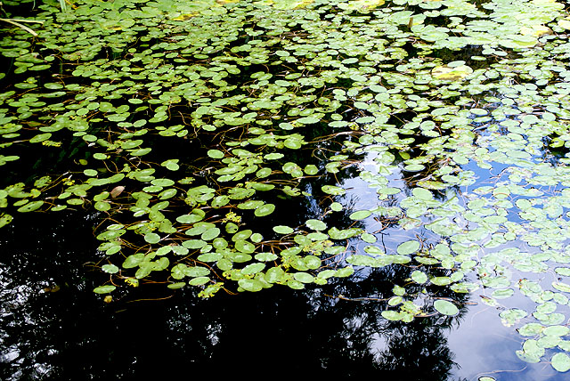 geopark_komatsugaike_leaf.jpg