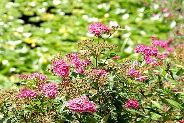 geopark_onogahara_flower.jpg