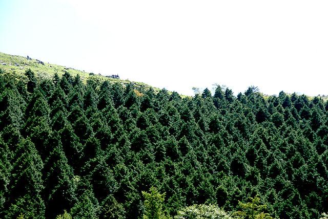 geopark_onogahara_tree.jpg