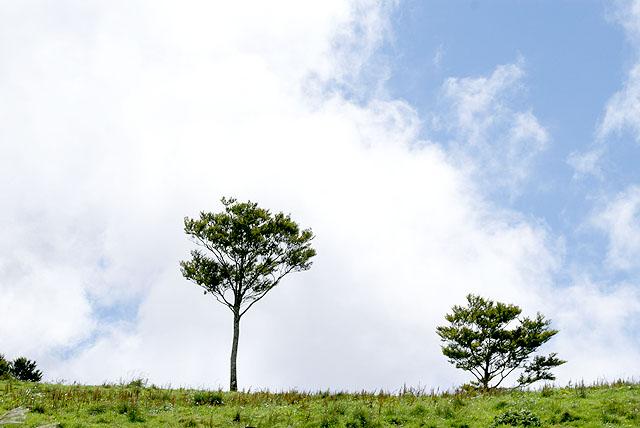 geopark_onogahara_tree2.jpg