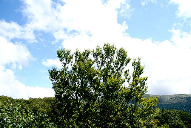 geopark_onogahara_tree3.jpg