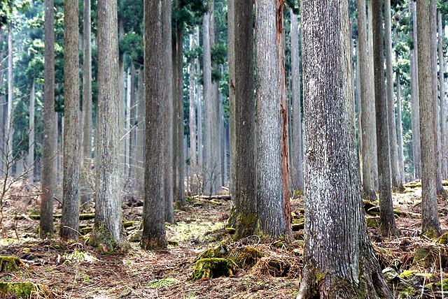 nishihour_af_trees1.jpg