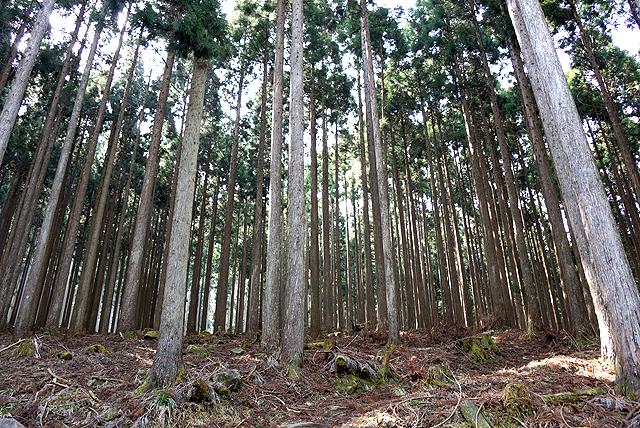 nishihour_af_trees2.jpg