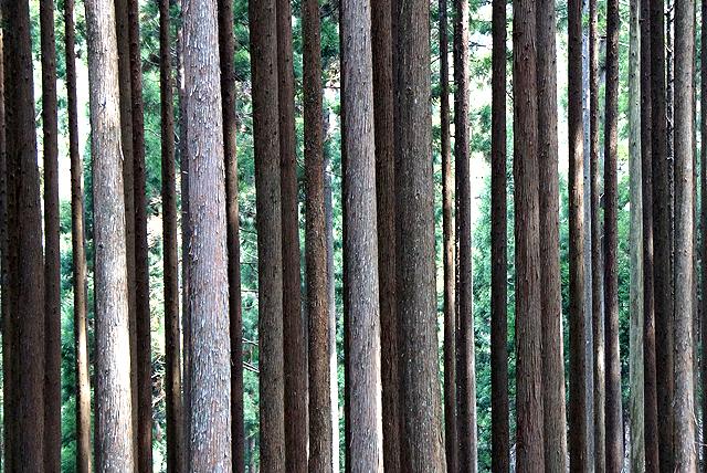 nishihour_af_trees3.jpg