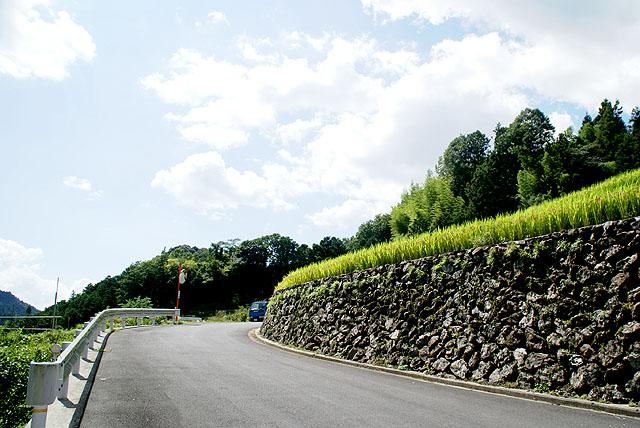 omodani_tanbo_road.jpg