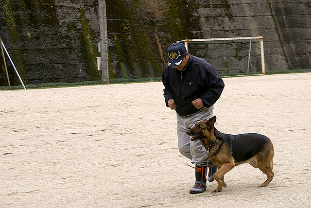 policedog_trainer_running.jpg