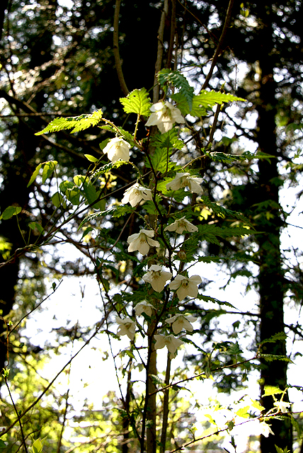 sanpa_flowers.jpg